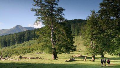 În drum spre Oslea / Creasta Oslei, Oslea, Muntii Valcan, Gorj, Hunedoara