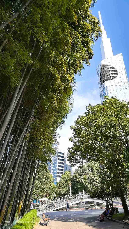 Peisaj cu bambus si Turn Batumi