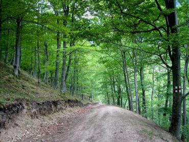Drumul de acces - Cetatea dacica de la Capalna