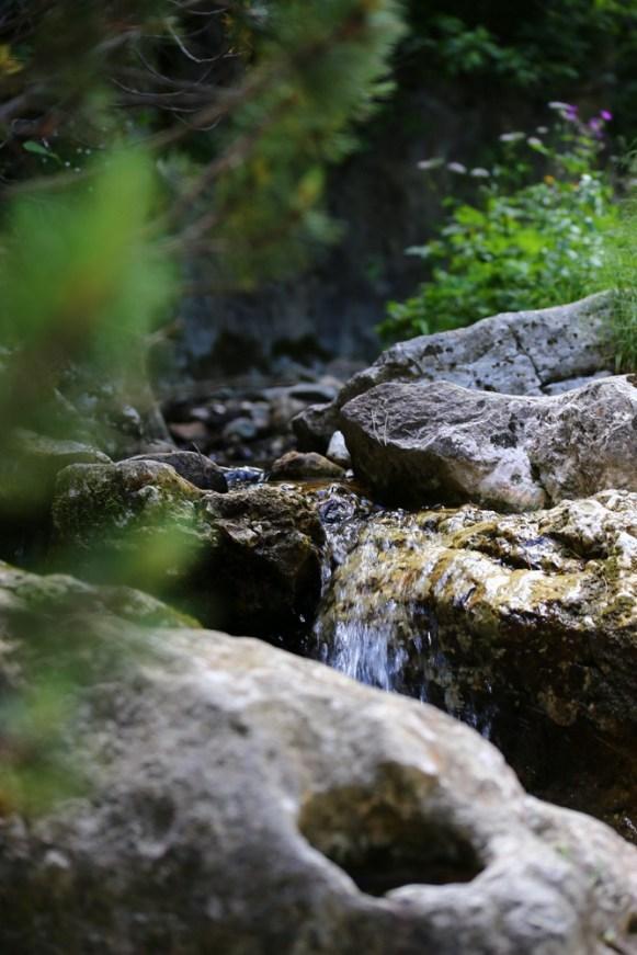 Padina si Valea Horoabei - Bucegi - iulie 2016_51