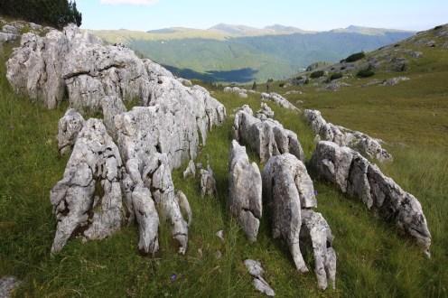 Padina si Valea Horoabei - Bucegi - iulie 2016_66