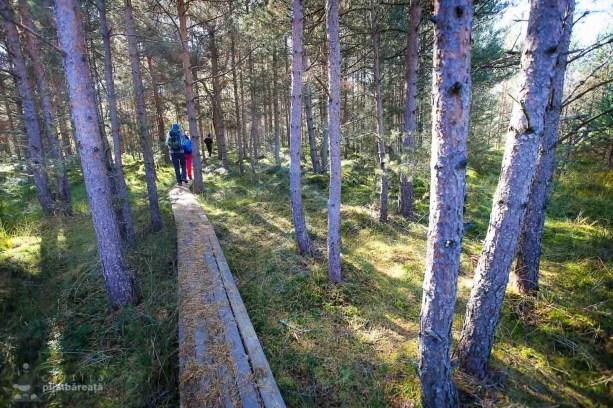 Parcul National Calimani - Tinovul Saru Dornei_07