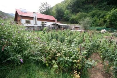 Pensiunea Floare de Colt - Poiana Galdei (zona Intregalde)_26_resize