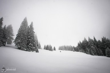 Plimbare pe schiuri Gura Diham Poiana Izvoarelor_12