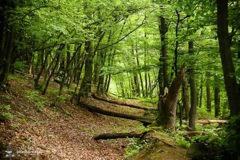 Traseu Ciucarul Mic - Defileul Dunarii_04