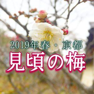 2019年京都の梅の見頃とスポットの記事のアイキャッチ画像