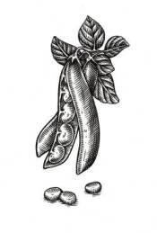 fasolaki λαδερο