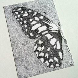 Little Butterfly Wing