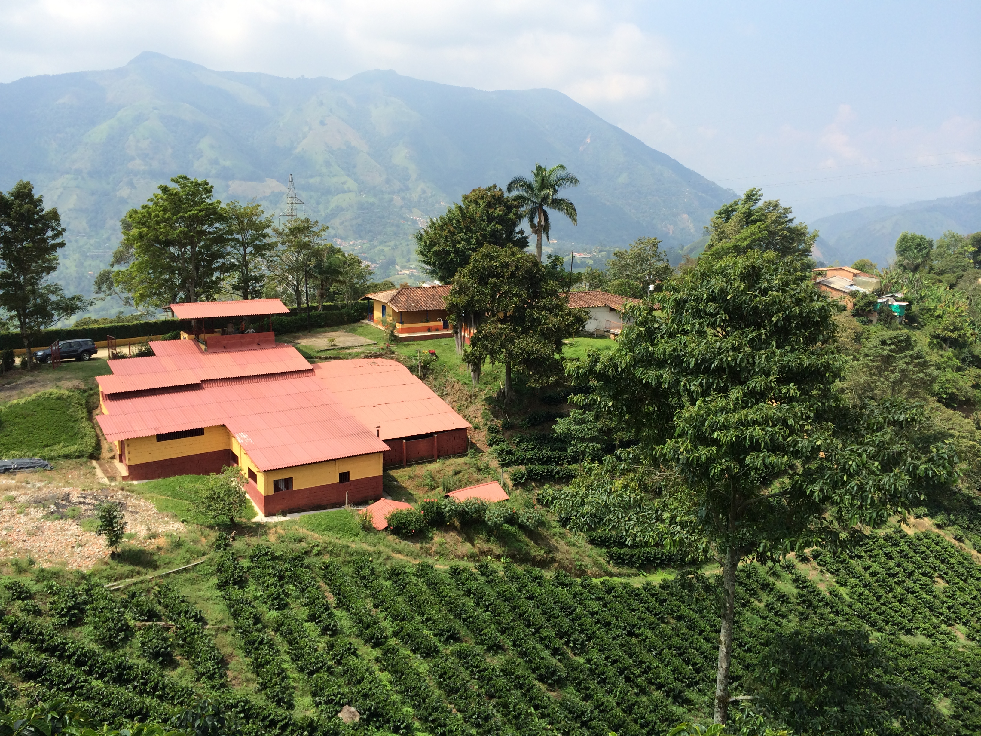 Finca Veracruz via @carvetiicoffee