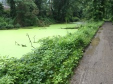 algae-ridden, disused canal. The color is as beautiful as the odor is pungent.