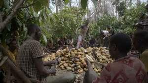 (c) Pedro Brito da Fonseca Cacao enfants pris au piège