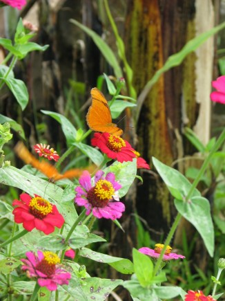 Mariposas in the Garden