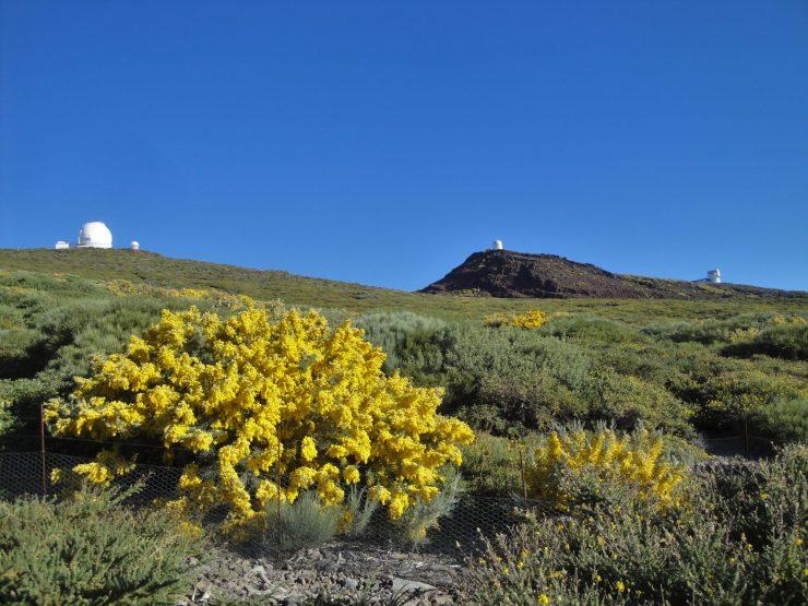 Observatoire, Roque de los Muchachos