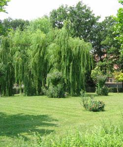 giardinaggio1-small-over
