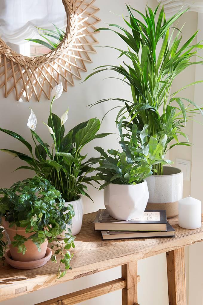 plantas feng shuio Vision Art NEWS