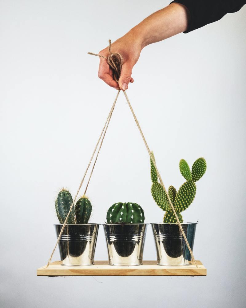 1 o guia completo para escolher o melhor vaso para suas plantas Vision Art NEWS