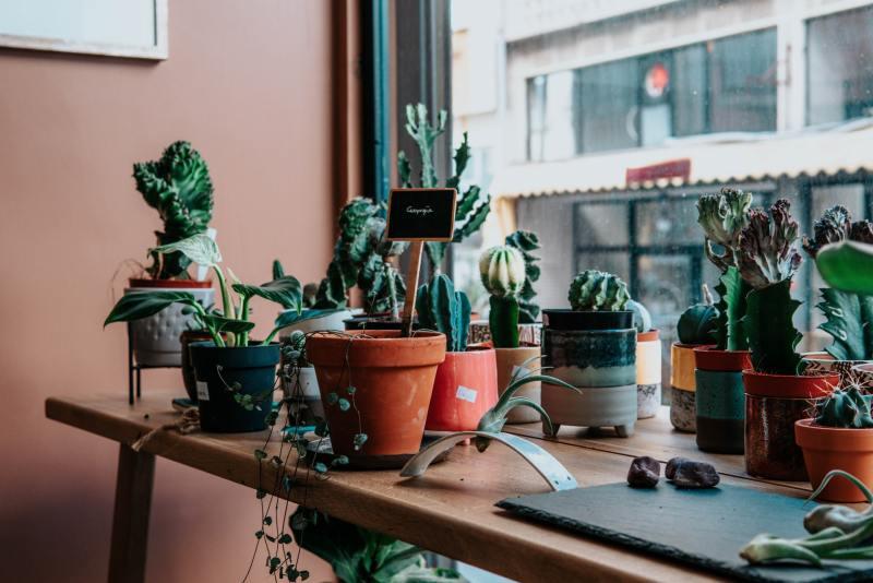 10 o guia completo para escolher o melhor vaso para suas plantas Vision Art NEWS