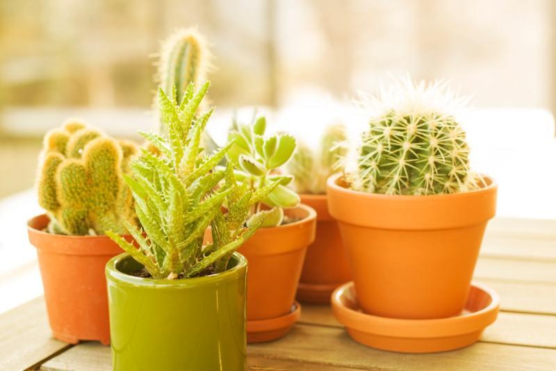 11 o guia completo para escolher o melhor vaso para suas plantas Vision Art NEWS