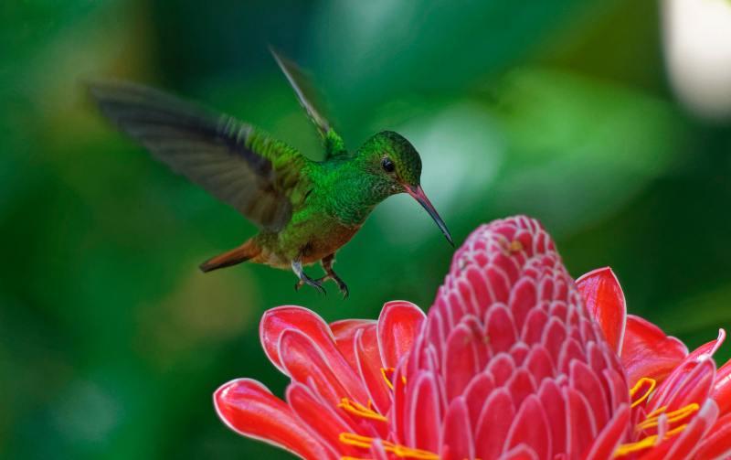12 10 flores que vao trazer beija flores para seu jardim Vision Art NEWS