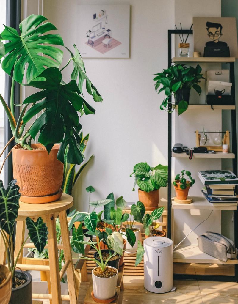 12 o guia completo para escolher o melhor vaso para suas plantas Vision Art NEWS