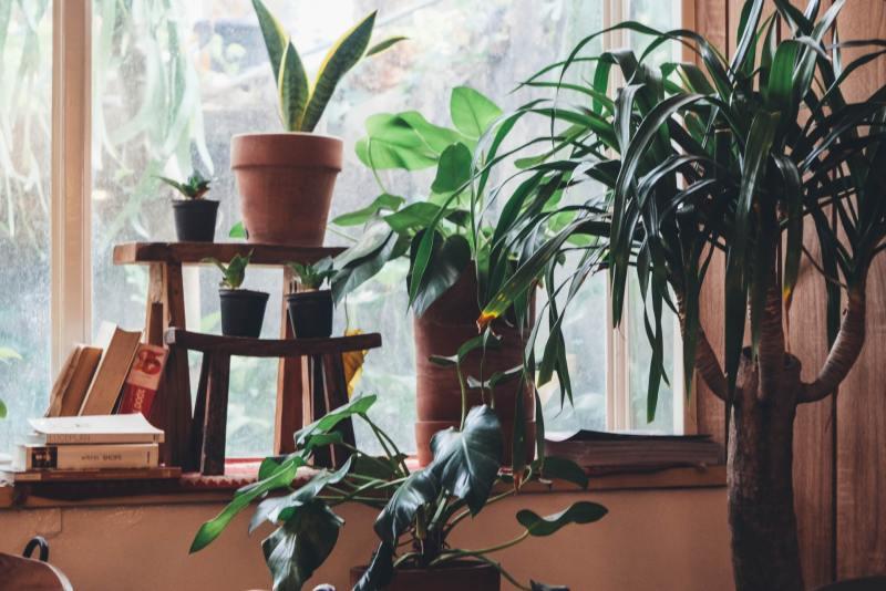 3 o guia completo para escolher o melhor vaso para suas plantas Vision Art NEWS