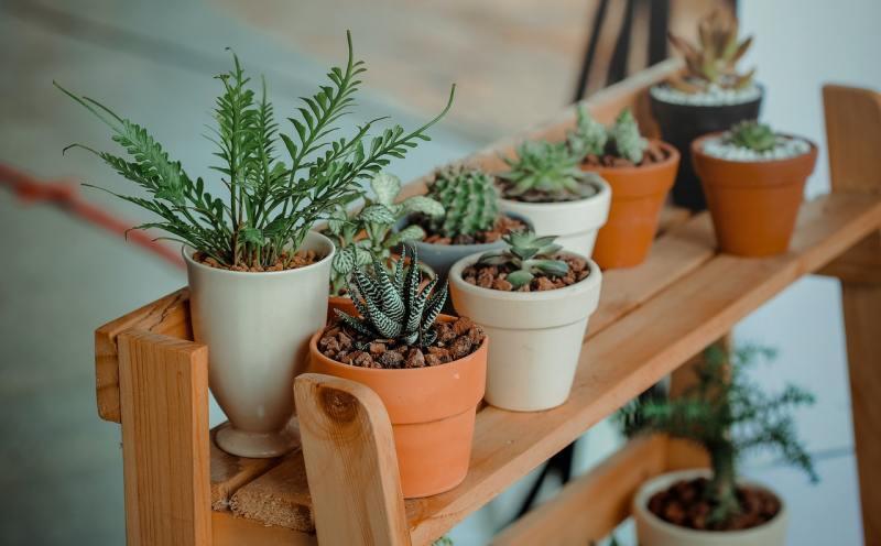 4 o guia completo para escolher o melhor vaso para suas plantas Vision Art NEWS