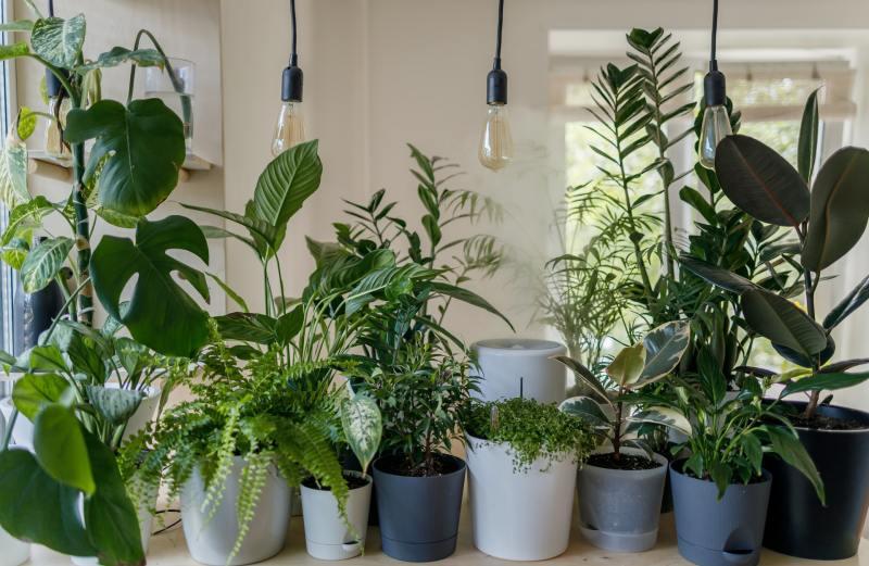 9 o guia completo para escolher o melhor vaso para suas plantas Vision Art NEWS