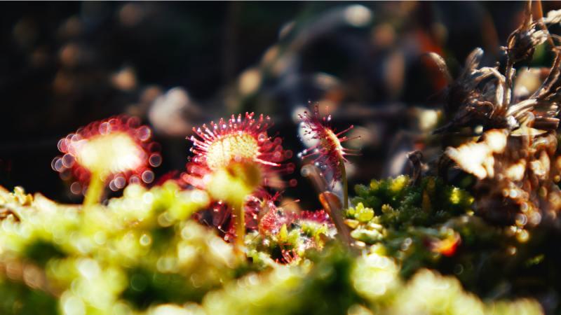 Como plantar e cuidar de plantas carnívoras 12 Vision Art NEWS