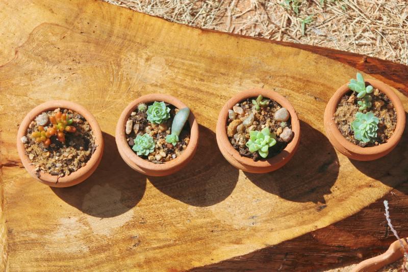 Feng Shui Como incluir plantas na sua casa seguindo a prática 07 Vision Art NEWS