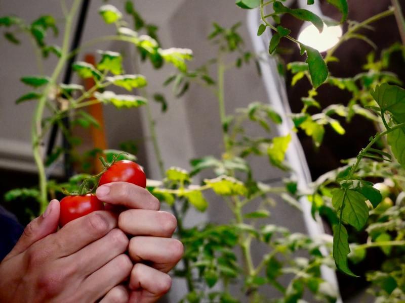 o que fazer com sua colheita para ela durar mais tempo casa.com 3 unsplash per loov Vision Art NEWS