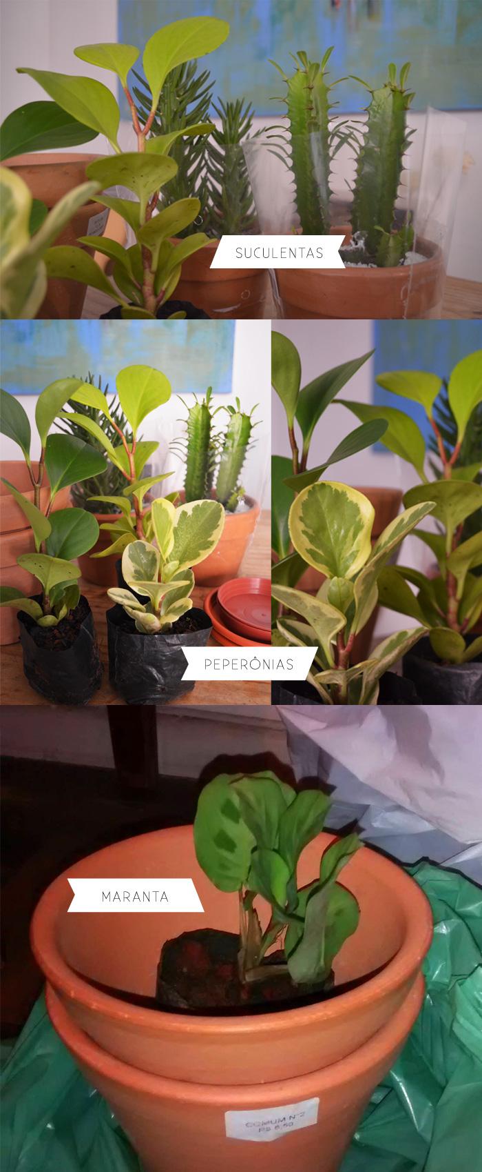 casa-baunilha-plantas