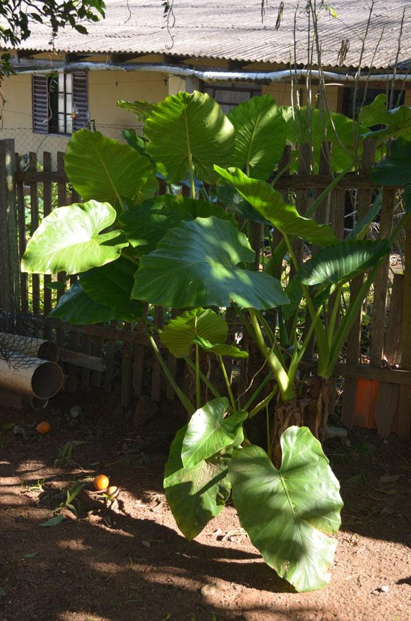 jardim-casa-baunilha11