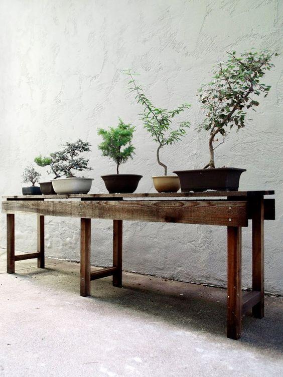 La energía de las plantas según el Feng Shui