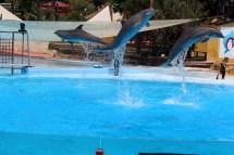 Delfinene kan mange ulike triks, og tar gjerne et par saltoer