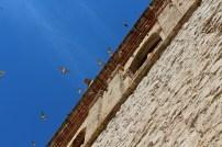 Fugler som flyr langs festningens murvegger