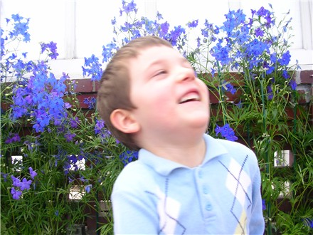 phipps-jeff-blue-flowers.jpg