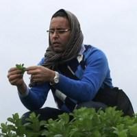 PICCOLA TERRA vince CinemAmbiente 2012   Successo di pubblico alla presentazione SCA   Aziz Wahbi, coltivatore d'integrazione