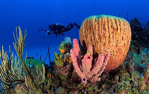 diving dominican republic