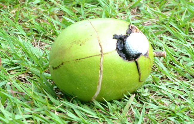 coconut golf ball