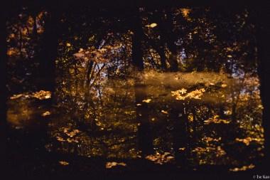 kao-backyard-fall-3741