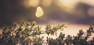 freedom hypnosis butterfly in fields