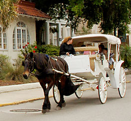 horse carriage tour