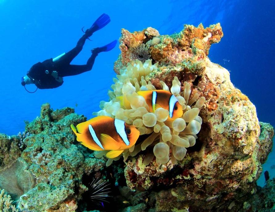 Ontdek Curaçao onder water!
