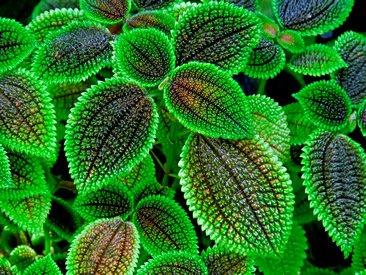 planta da amizade