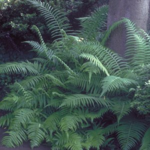 Southern River - Wood - Fern growing in a wooded area.