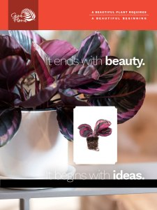 CasaFlora: It ends with beauty. It begins with ideas.