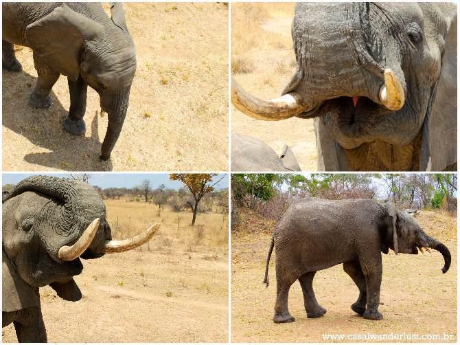 Elefantes Harare