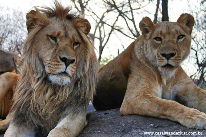Leões Harare