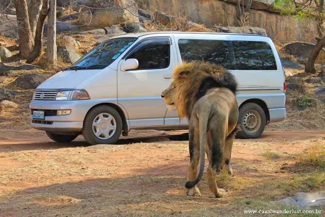 Lion Harare
