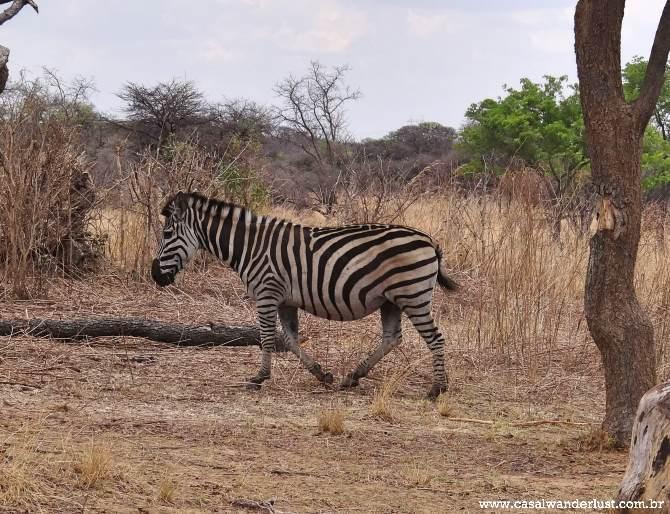 Zebra Harare
